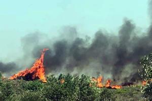 Φωτιά – Ελαφόνησος: Φεύγουν οι τουρίστες!