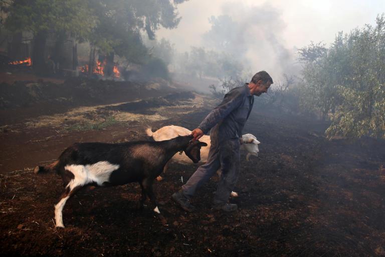 Εύβοια φωτιά: Η μάχη των κατοίκων να σώσουν τα ζώα τους [pics]