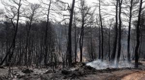 Φωτιά Εύβοια: Άρση τηλεφωνικού απορρήτου ζητούν οι αρχές
