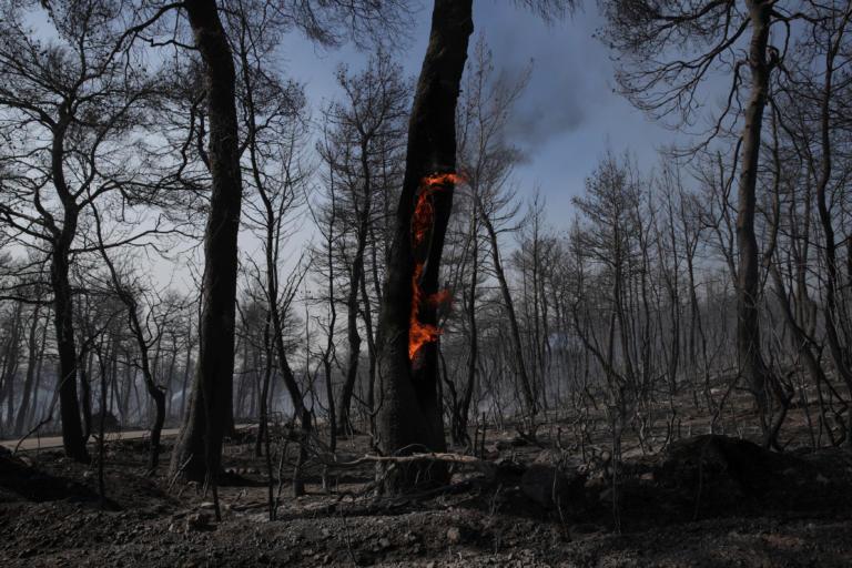 Εύβοια: Οι πρώτες εικόνες της καταστροφής μετά τη μεγάλη φωτιά