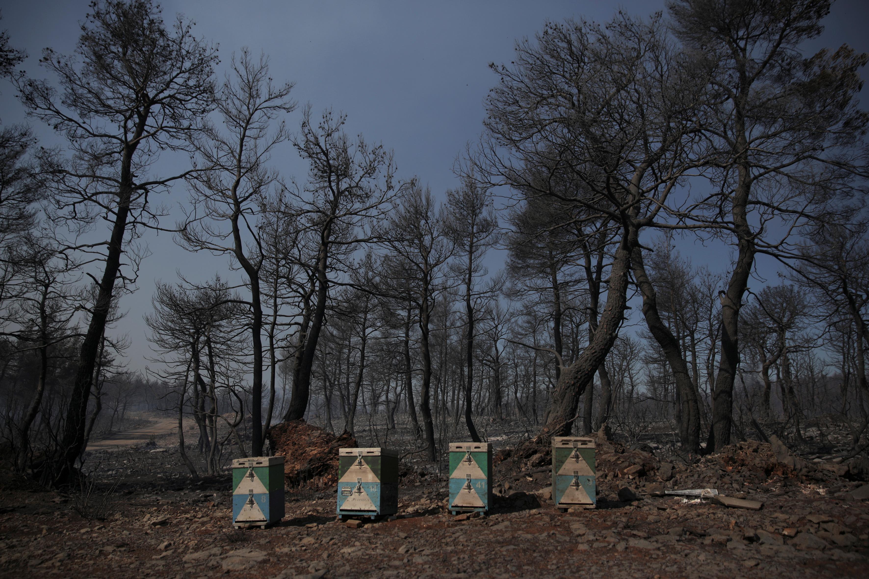 Φωτιές: 718,65 ευρώ η εφάπαξ ενίσχυση στους εργαζόμενους σε πυρόπληκτες επιχειρήσεις