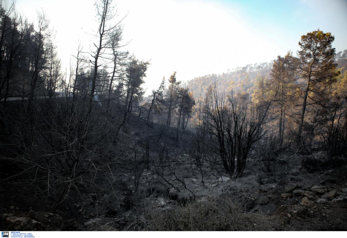 Εύβοια: Τεράστια η οικολογική καταστροφή - Μάχη με τις αναζωπυρώσεις για τους πυροσβέστες