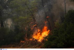 Υψηλός ο κίνδυνος για φωτιά την Τρίτη