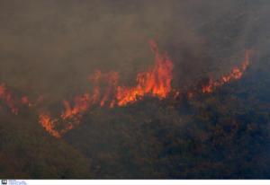 Αχαΐα: Μεγάλη κινητοποίηση για πυρκαγιές σε Μπούκα και Φώσταινα