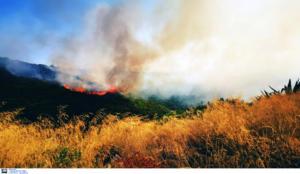 Ρέθυμνο: Φωτιά στον Πάνορμο – Οι βοριάδες δυσκολεύουν την κατάσβεση