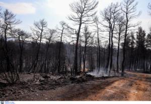 Εύβοια φωτιά: Η πρώτη χαρτογράφηση της περιοχής που κάηκε