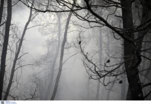 Ζάκυνθος: Σε ύφεση η πυρκαγιά ανάμεσα στα χωριά Κοιλιώμενος και Αγαλάς