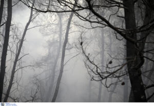 Αναστάτωση από φωτιά στη Λακωνία
