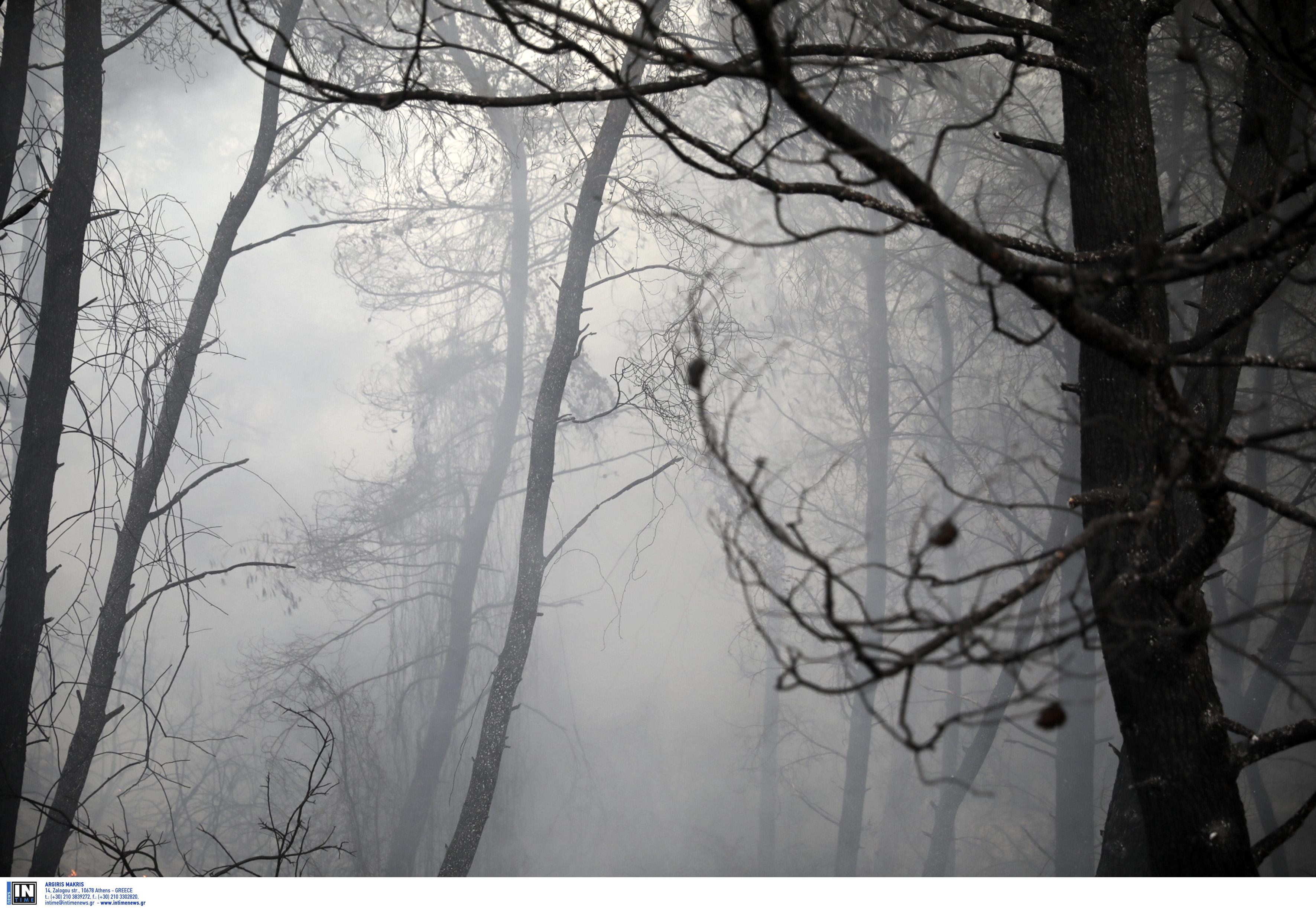 Κοζάνη: Υπό έλεγχο η φωτιά στην Ελάτη
