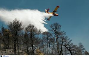 Μεγάλη φωτιά στους Δελφούς – Στη μάχη έξι αεροσκάφη κι ένα ελικόπτερο!