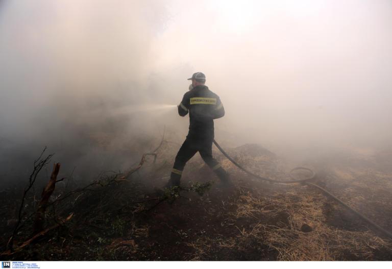 Φωτιά στη Χαλκιδική – Στις φλόγες δασική έκταση στη Σιθωνία