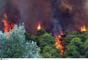 Φωτιά στο Αμύνταιο στη Φλώρινα
