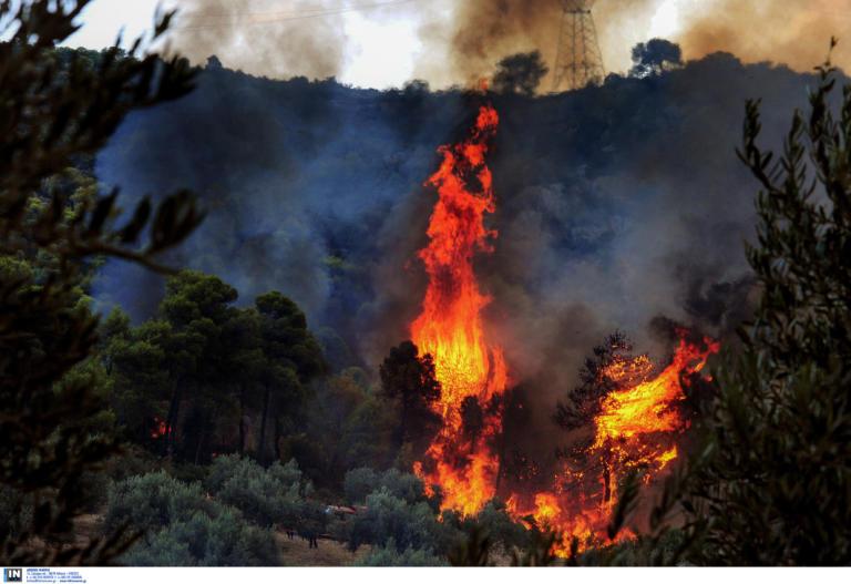 Φωτιά στην περιοχή Κορώνη στην Πάργα