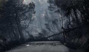 Εύβοια: Κρανίου τόπος η άλλοτε καταπράσινη περιοχή στην κεντρική Εύβοια