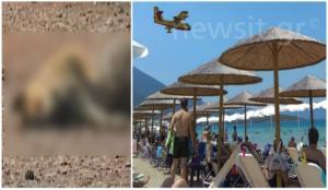 Φωτιά Εύβοια: Εικόνες σοκ στα καμένα! Νεκρά ζώα και μαύρο παντού