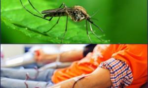 """Ο ιός του Δυτικού Νείλου """"στράγγισε"""" τις αιμοδοσίες – Δραματική έκκληση κάνουν οι θαλασσαιμικοί"""