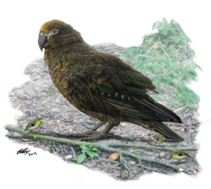 Αυτός είναι ο μεγαλύτερος παπαγάλος που έζησε ποτέ στη Γη! [pic]