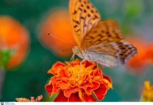 Μια, ωραία πεταλούδα!