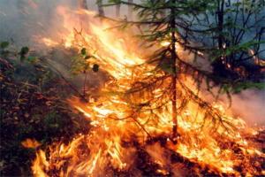 Σιβηρία: Οικολογική τραγωδία χωρίς τέλος – Μαίνονται σε 28.000.000 στρέμματα οι φωτιές