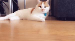 Ο γάτος πρόσφυγας της Ειδομένης ζει ευτυχισμένος στη Σουηδία