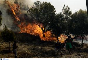 Πυροσβεστική: Καήκαμε και σήμερα! 46 δασικές πυρκαγιές σε όλη τη χώρα