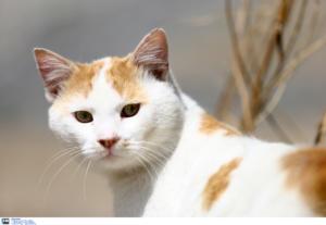 Οι γάτες δημιουργούν δεσμούς με τους ανθρώπους – Τι δείχνει έρευνα