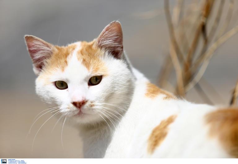 Πάτρα: Νέα κτηνωδία με έξι νεκρές γάτες! Τις ξεπάστρεψαν με φόλες στην αυλή που ζούσαν
