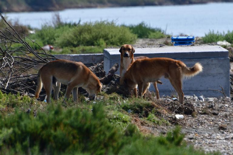 Αδέσποτα σκυλιά επιτέθηκαν σε αντιπεριφερειάρχη στη Στερεά Ελλάδα!