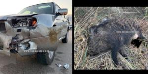 """""""Ένα τεράστιο ζώο κτύπησε το αυτοκίνητο""""! Νέο τροχαίο στη Φθιώτιδα"""