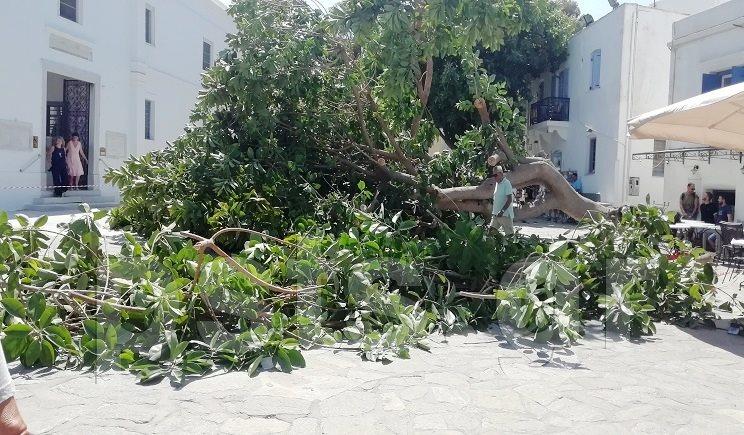 Πάρος: Δέντρο καταπλάκωσε άνθρωπο στην είσοδο της Εκατονταπυλιανής! [pics]