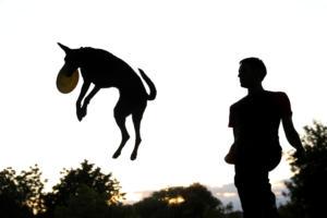 Μυστηριώδης νόσος σκοτώνει τα σκυλιά στη Νορβηγία