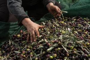 Βορίδης: Συνάντηση για την πώληση χύμα και ανώνυμου ελαιόλαδου