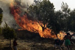 Κέρκυρα: Σπίθα που ξέφυγε από αλυσοπρίονο προκάλεσε τη φωτιά!