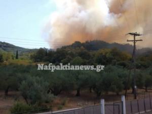 Φωτιά τώρα στην Φωκίδα: Κερδίζουν τη μάχη οι ήρωες πυροσβέστες! video, pics