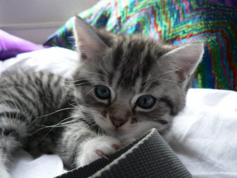 """Πάτρα: """"Έλιωσε"""" το κεφάλι γάτας με το πόδι του! Διχάζει η ποινή για την κτηνωδία"""