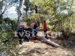 Εύβοια: Κορμός δέντρου καταπλάκωσε γυναίκα από τη μια στιγμή στην άλλη – Στο νοσοκομείο σοβαρά τραυματισμένη [pics]