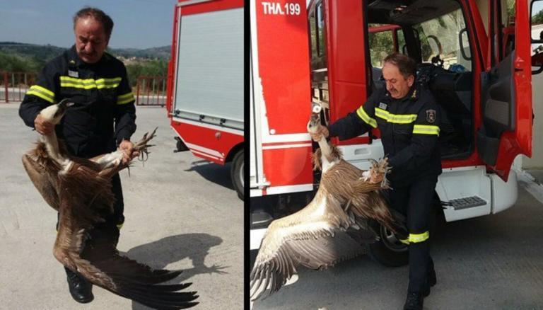 Χανιά: Το ατύχημα της χρονιάς! Τεράστιος γύπας χτύπησε σε λεωφορείο! video, pics