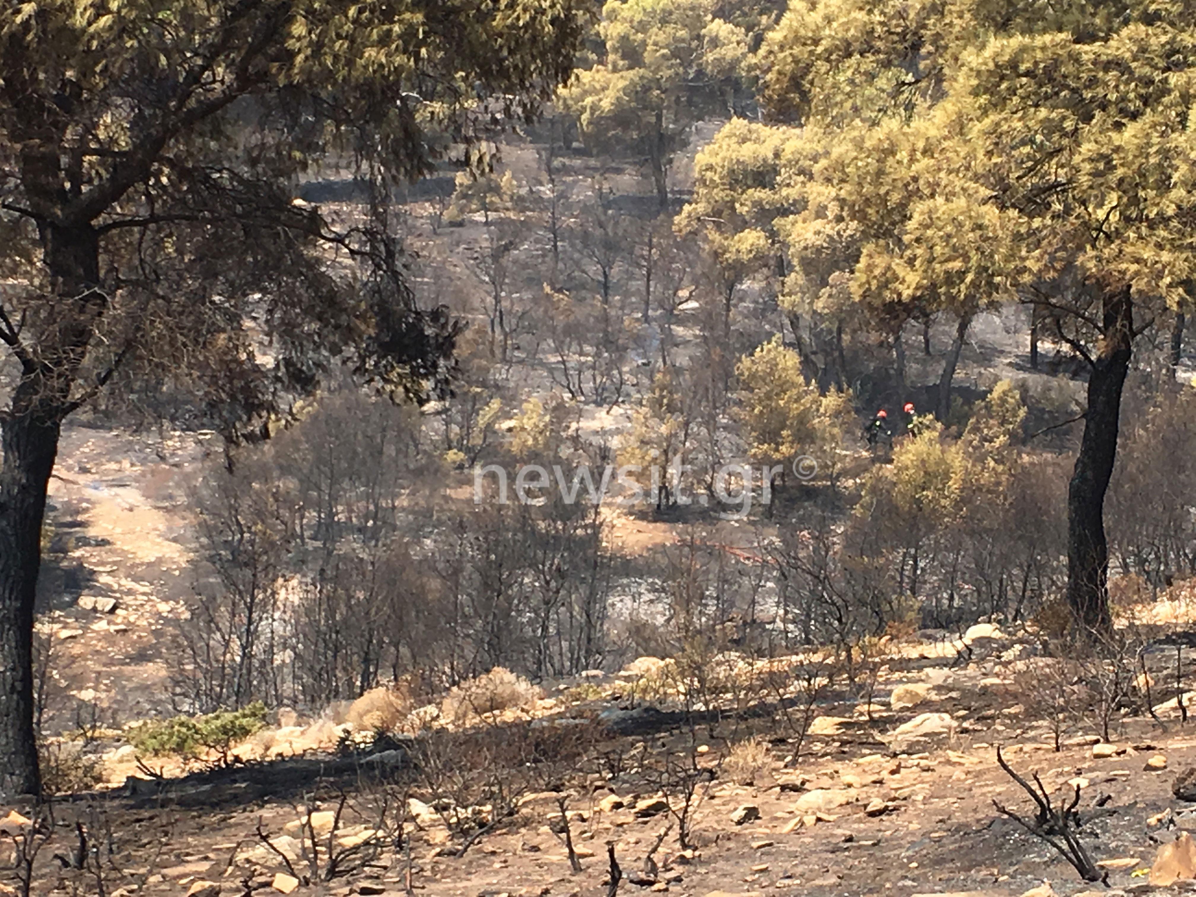 Φωτιά Νέα Μάκρη: Τι άφησε πίσω της η πύρινη λαίλαπα