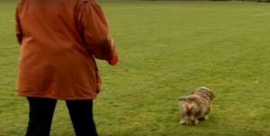 Δανία – έρευνα: Υπέρβαρο το αφεντικό, υπέρβαρος και ο σκύλος του!