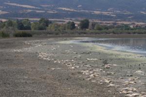 Θεσσαλονίκη: Νεκροταφείο ψαριών η λίμνη Κορώνεια – Η εξήγηση πίσω από αυτές τις εικόνες [pics]