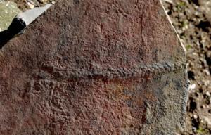 Απολίθωμα ταξιδιάρας σαρανταποδαρούσας 500 εκατομμυρίων ετών!