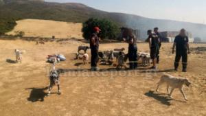 Θήβα: Συναγερμός για φωτιά σε κυνοτροφείο! Σώθηκαν οι σκύλοι
