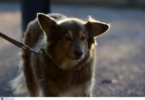 Βόλος: Επιθέσεις αδέσποτων σκύλων σε δύο γυναίκες! Δαγκώματα από το κεφάλι μέχρι τα πόδια