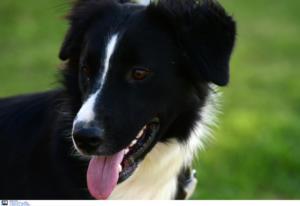 Καλαμάτα: Μαχαίρωσε και προσπάθησε να κάψει ζωντανό το σκυλάκι του παππού και της γιαγιάς του!