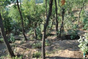 Χασισόδεντρα… «θηρία» στη Φθιώτιδα [pics]
