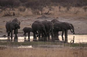 Ζιμπάμπουε – ξηρασία: Περισσότεροι από 50 ελέφαντες πέθαναν μέσα σε λίγες μέρες!