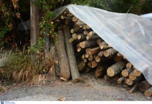 Δέντρο σκότωσε 25χρονο στην Αχαΐα!