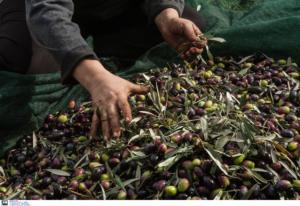 Κρήτη: Αγρότες μόνοι… ψάχνουν – Οι αναρτήσεις του Facebook που προκαλούν συζητήσεις!