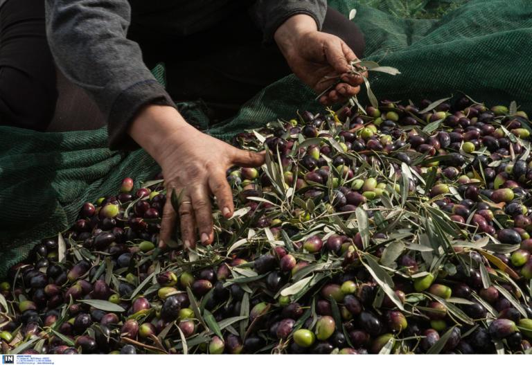 Ελληνικό ελαιόλαδο και ελιές… γλίτωσαν τους πρόσθετους δασμούς των ΗΠΑ