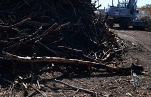 Θεσσαλονίκη: Ζημιές σε 4 αυτοκίνητα από δέντρο που έπεσε!